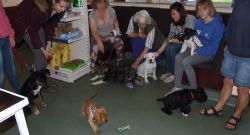 Puppy Party: 15th June 2016